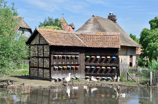 Ungersheim, فرنسا: étang et basse-cour