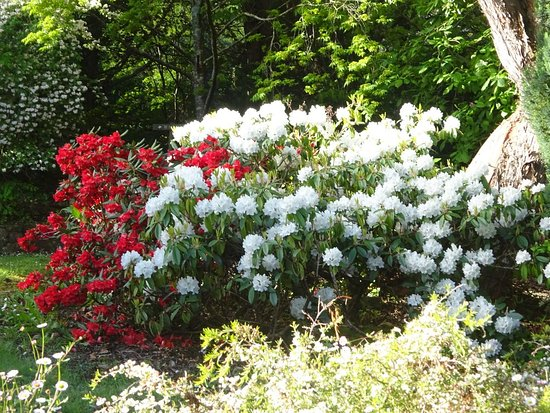 Pirianda Garden: Spring flowers