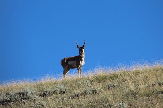 Mackay, ID: Where the antelope roam