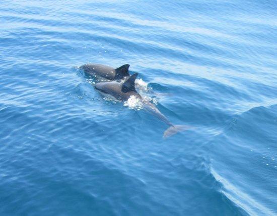 AlgarExperience: dolphins