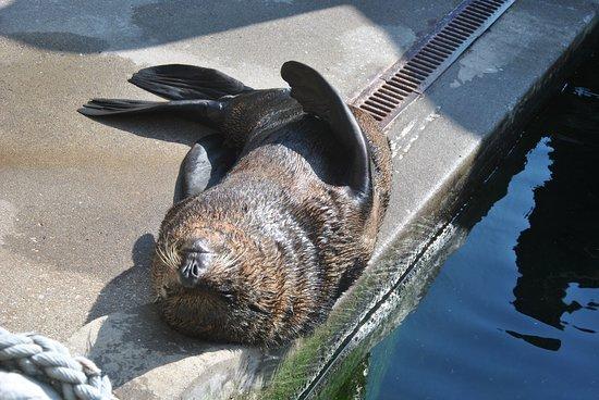 Bristol Zoo Gardens: foca al solle