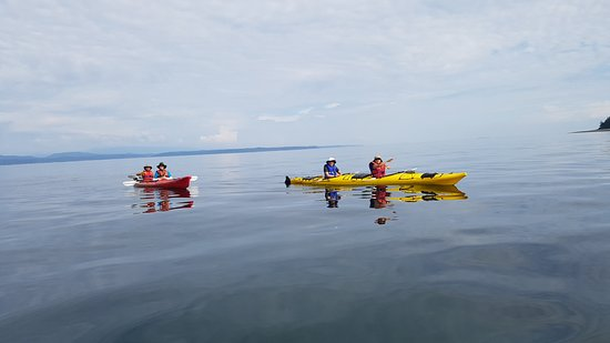 Rent kayaks from Quadra Island Kayaks, they operate out of our marina.