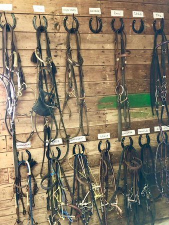tack room picture of leghorn ranch pitt meadows tripadvisor rh tripadvisor com Small Tack Room Ideas Old Ranch Tack Rooms