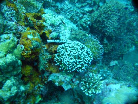 Pescador Island: Jolie Promenade sur les Coraux