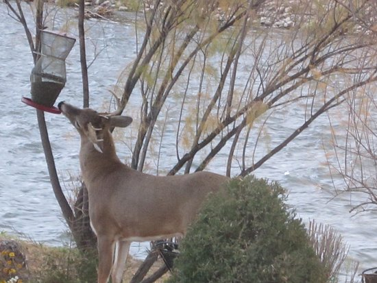 Florence, CO: Seen on the property: A deer gives the birds a run for their money (or their seed).