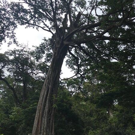 Bilde fra Hotel Hacienda Guachipelin