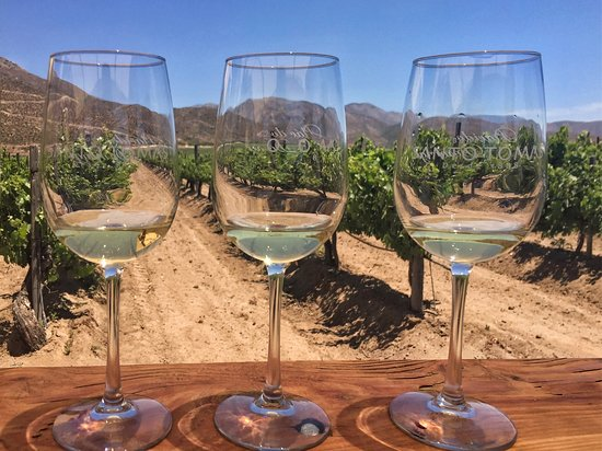Valle de Guadalupe, Mexico: Wine tasting in the vineyard.