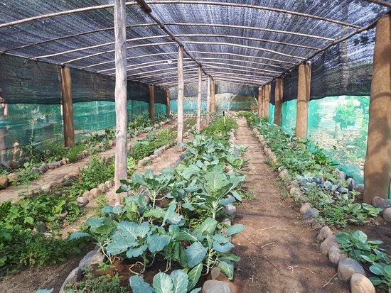 Petatlan, Mexico: Farm to table