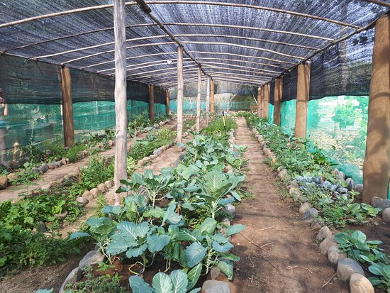 Petatlan, Meksyk: Farm to table