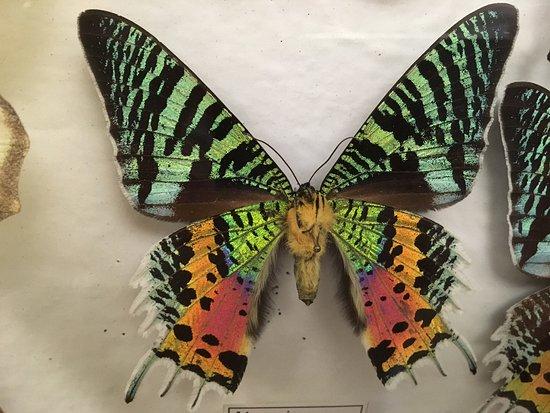 Steijl, The Netherlands: Butterflies