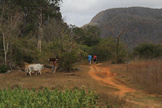 "Valle de Vinales: Path from the ""tobacco/coffee/sugarcane"" farm to the ""pinturas"""