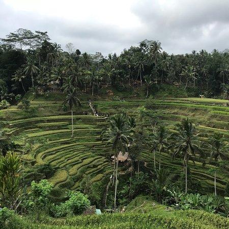 Tegalalang Rice Terrace Φωτογραφία