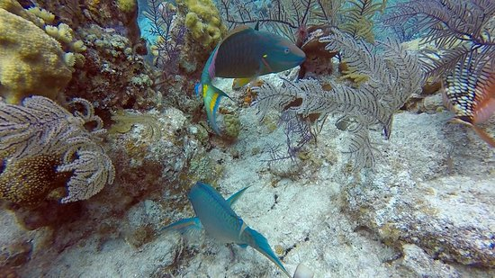 Oasis Divers, Grand Turk...good fishlife