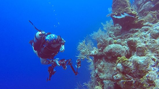 Oasis Divers, Grand Turk...wonderful wall diving