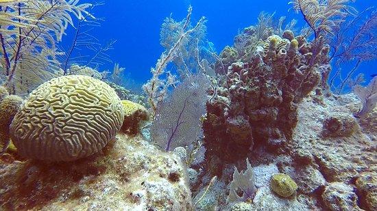 Oasis Divers, Grand Turk...healthy reefs