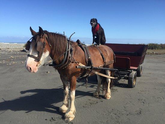 Barrytown, New Zealand: Pearl sitting on Murphy's back
