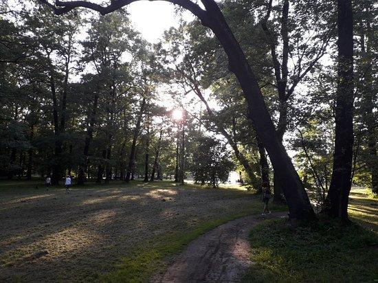 The Potulicki Park