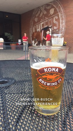 Anheuser-Busch Brewery: Drinking the free 16 oz. at the end of the tour and admiring the famous clydesdale.