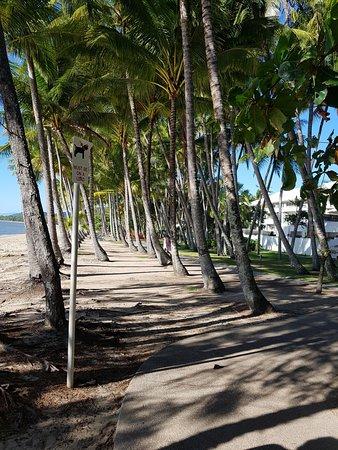 Palm Cove Beach: love the palms