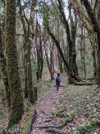 InspireU Adventures: Ghorepani area. Gorgeous forest paths
