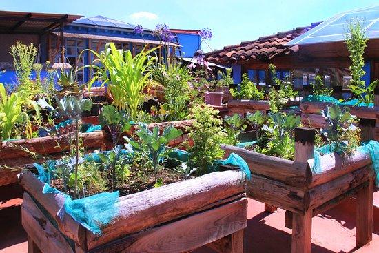 La Casa del Pan Papalotl: En el techo nuestro huerto Organico.