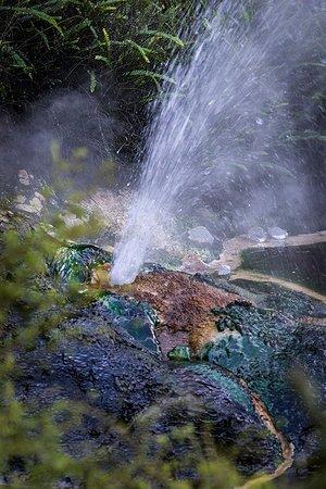 Waimangu, นิวซีแลนด์: Geothermal action