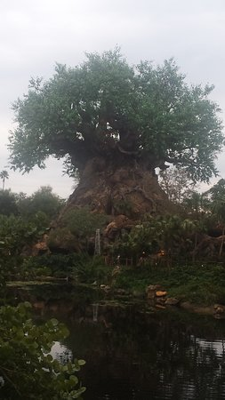 Animal Kingdom Ντίσνεϊ: Tree of Life