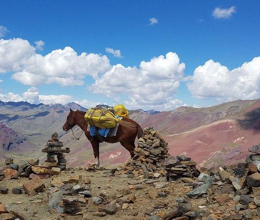 Viaggio di 2 giorni alla Montagna Arcobaleno da Cusco: Pack horse on the trail...