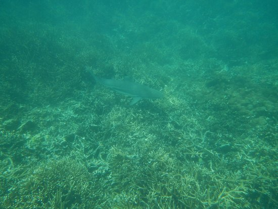 Sri Lanka Diving Tours - Trincomalee: One of the many sharks we saw