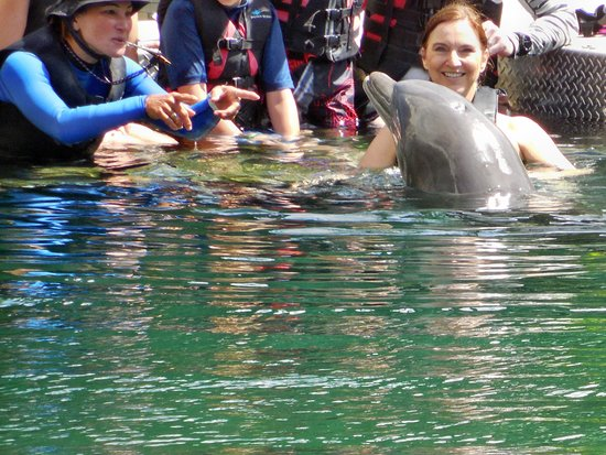 Dolphin Quest: I never dreamed I would be this close to a dolphin.