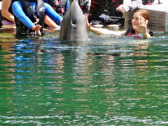 Participating in the dolphin's training means each experience at Dolphin Quest is unique.
