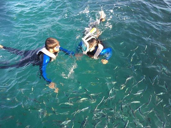 Private Escape Samui: snorkeling