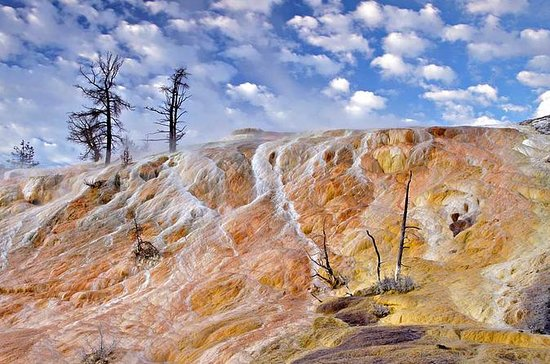 Yellowstone Upper Loop Tour from Cody...