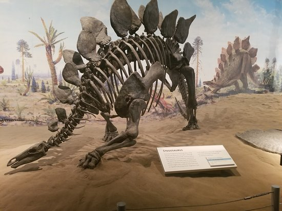 Legendary Travels Day Tours: Perfect concept of presenting dinosauruses