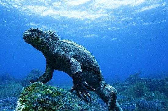 6-Day Galapagos All Inclusive Island...