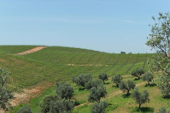 Wine and Food Tour of Alentejo from...