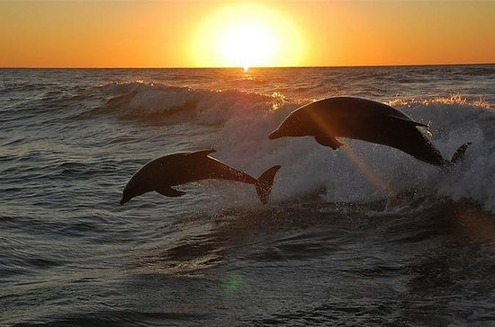Sunset Dolphin & Snorkel Tour