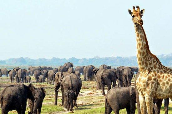 2 Days Etosha wildlife Safari-Namibia...