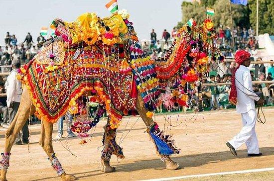 Royal Rajasthan con la fiera di