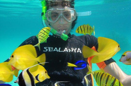Sealanya Dolphinpark and Seapark...