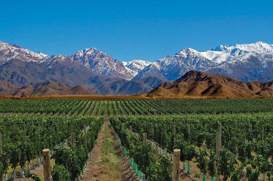 Tour classico di 7 giorni a Mendoza e