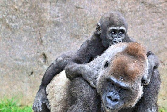 San Diego Zoo Safari Park: another photos