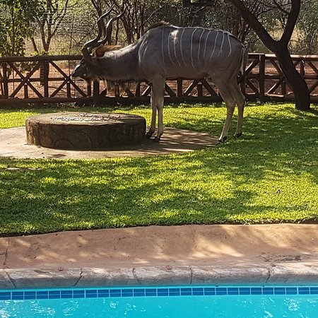 Marloth Park, África do Sul: IMG_20180510_130441_944_large.jpg