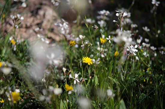 Comares, España: Wildflowers in April