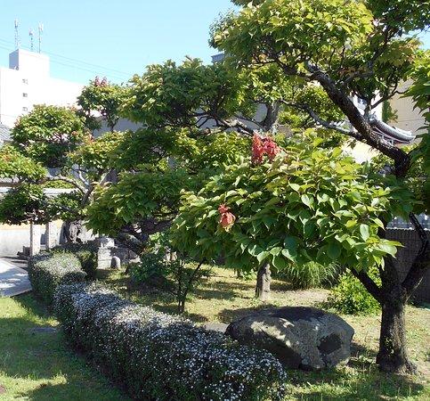 Jodoji Temple: 植木職人さんの力作