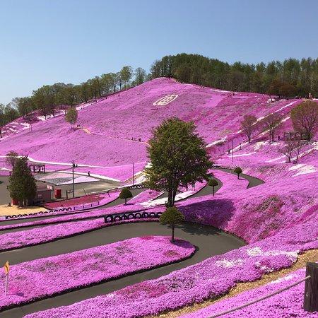 Higashimokoto Shibazakura Park照片