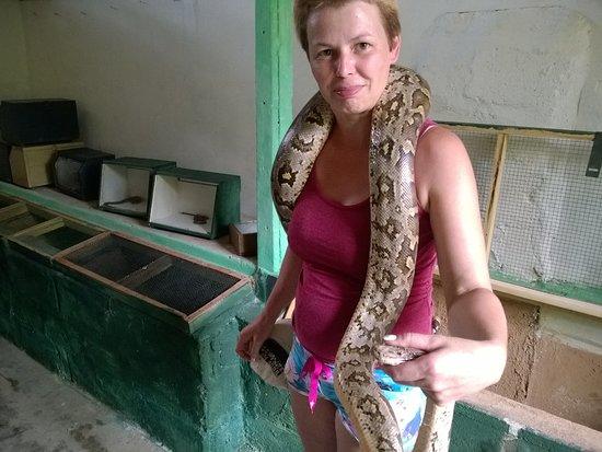 Snake Farm: Сзади открыта клетка с эфой