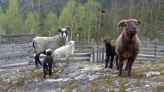 De Heibergske Samlinger, Sogn Folkemuseum照片