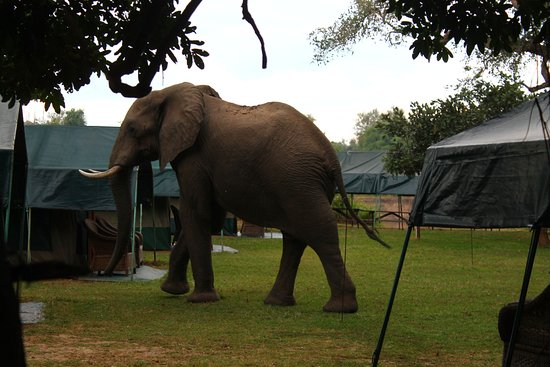 Kiboko Camp and Safaris: When the neighbours come to pay us a visit