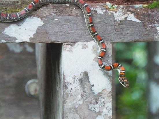 Permai Rainforest Resort: A local visitor